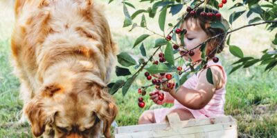 Frutas que pueden comer los perros.
