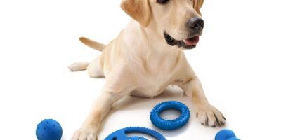 Juegos divertidos para nuestras mascotas con sus juguetes.